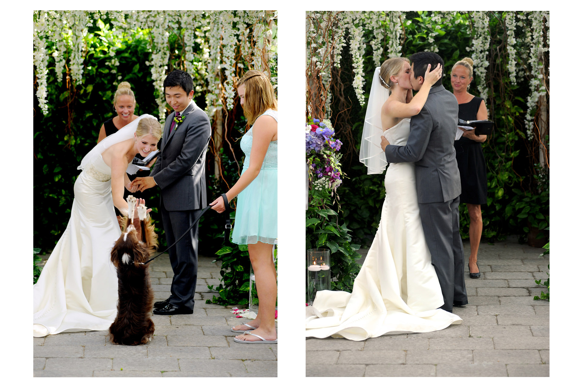 Planterra Conservatory wedding photographer's photo of Sarah high fives her dog during her wedding ceremony  at the Planterra Conservatory in West Bloomfield, Michigan.