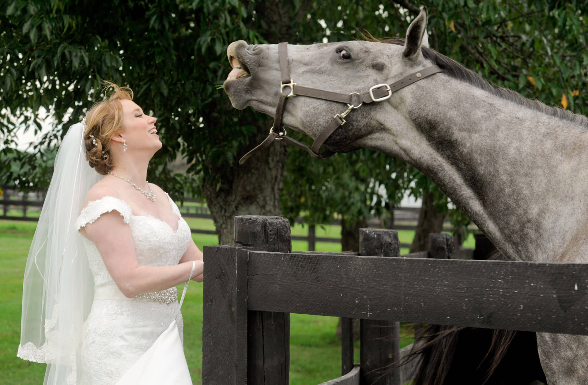 The bride laughs at a horse's attempt to spit on her during her Holly Hotel wedding in Holly, Michigan.