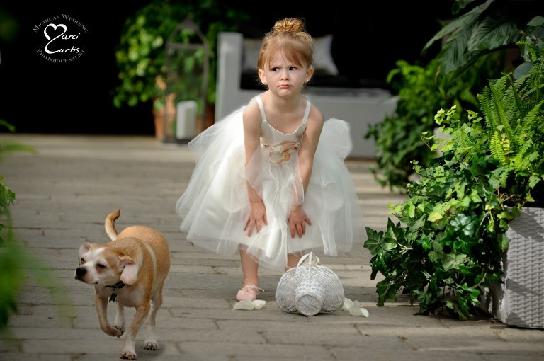 A flower girl looks at her spilled basket of flowers as the bride and groom's dog races down the aisle at a wedding at the Planterra Conservatory in West Bloomfield, Michigan.