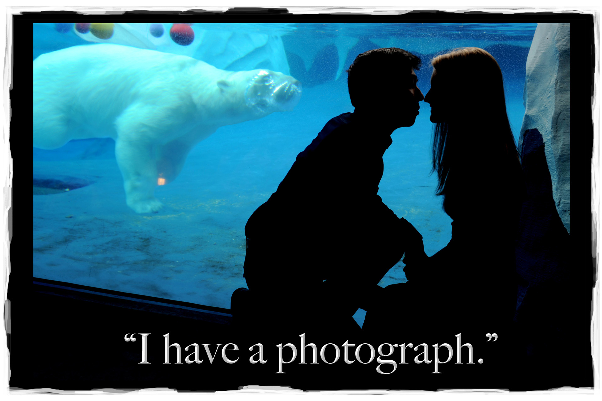 A Detroit couple kiss while a polar bear goes by at the Detroit zoo during an engagement photo shoot.